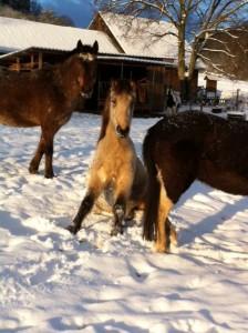 Pferd im Schnee sitzend